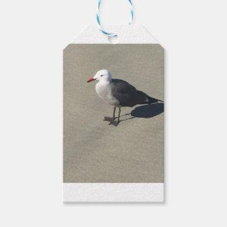 Seagull on Sandy Beach