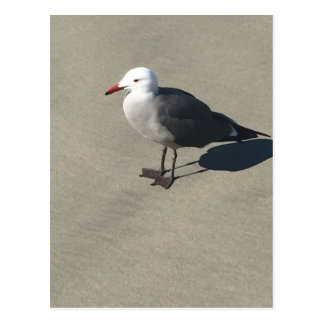 Seagull on Sandy Beach Postcard