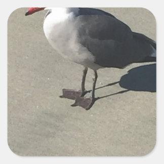 Seagull on Sandy Beach Square Sticker