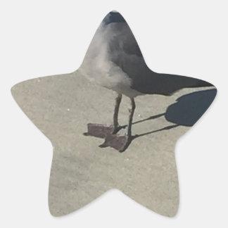 Seagull on Sandy Beach Star Sticker