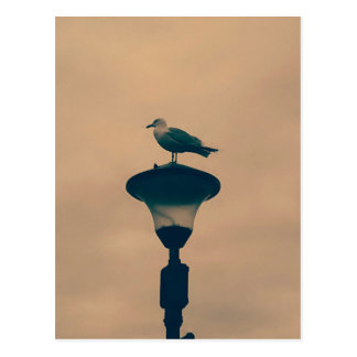 Seagull on Street Lamp Postcard