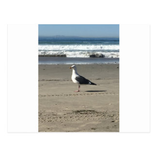 Seagull on the Beach Postcard