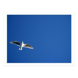 Seagull, Seattle Postcard