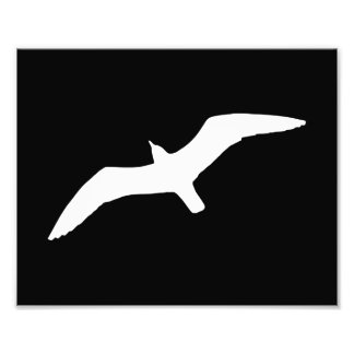 Seagull Shape Art Photo
