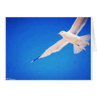 Seagull soaring through the sky greeting card