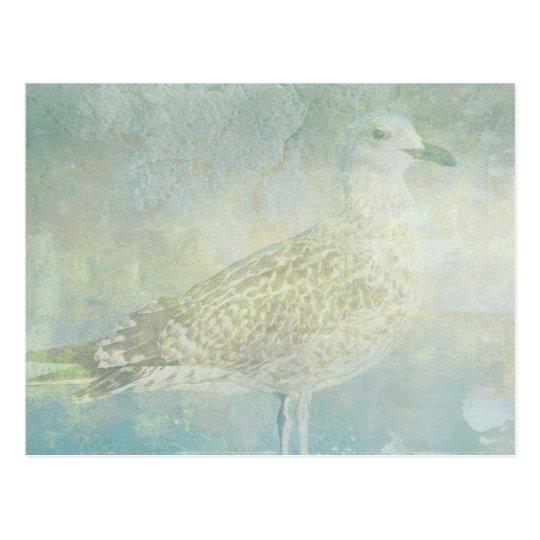 Seagull Sonata Postcard