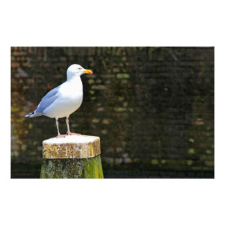 Seagull Stationery Design
