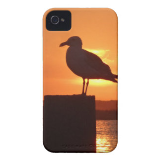 Seagull Sunset iPhone 4 Cover