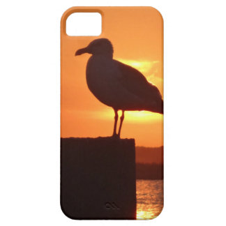 Seagull Sunset iPhone 5 Cases