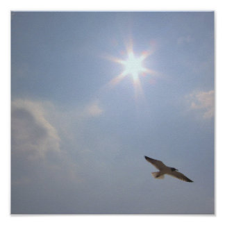 Seagull Under the Sun Mini-Poster Poster