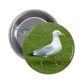 Seagull walking in the Park 6 Cm Round Badge