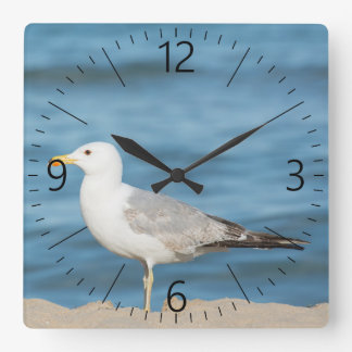 Seagull walking on the beach square wall clock