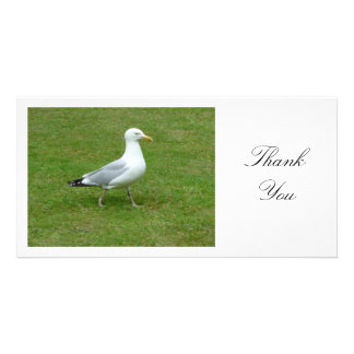 Seagull Walling in the Park - Thank You Custom Photo Card