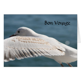 seagull wishes card