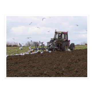 Seagulls and tractor postcard