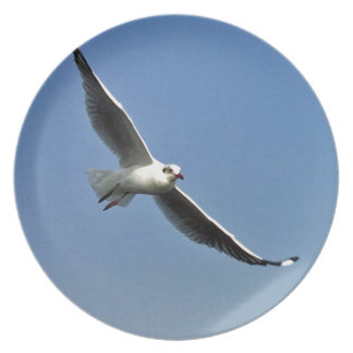 Seagulls are beautiful birds plate