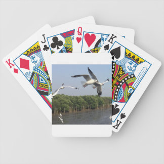 Seagulls at the beach bicycle playing cards