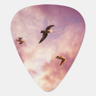 Seagulls flying in a sunset sky guitar pick
