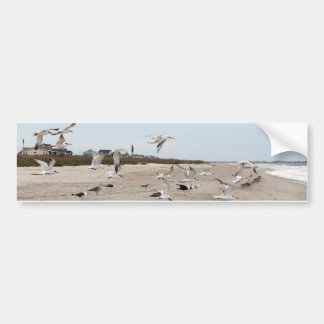 Seagulls Flying, Standing and Eating on the Beach Bumper Sticker