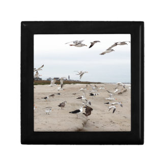 Seagulls Flying, Standing and Eating on the Beach Gift Box