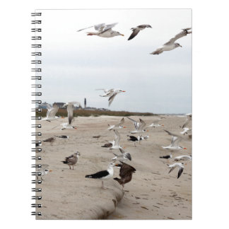 Seagulls Flying, Standing and Eating on the Beach Notebook