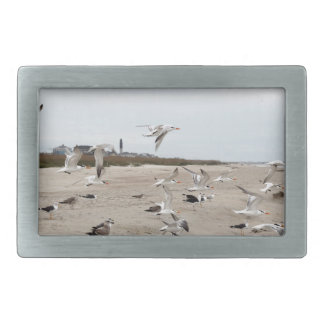 Seagulls Flying, Standing and Eating on the Beach Rectangular Belt Buckles