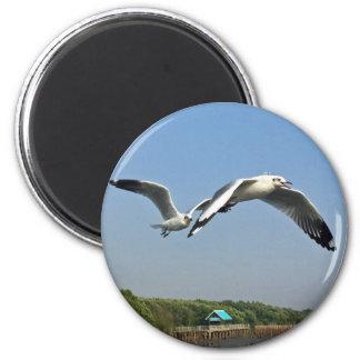 Seagulls in Flight Magnet