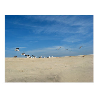 Seagulls on Cape May Beach Postcard