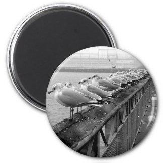 Seagulls on Railing 6 Cm Round Magnet