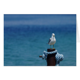 Seagulls Paradise At Mackinac Card