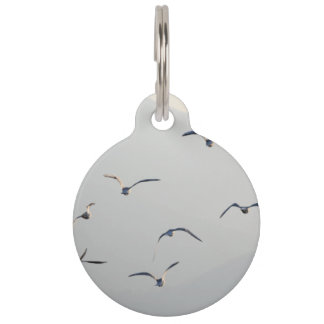 Seagulls Pet Tag