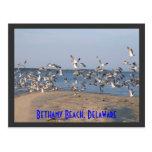 Seagulls Postcard, Bethany Beach, Delaware