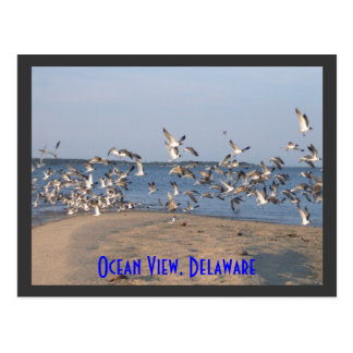 Seagulls Postcard, Ocean View, Delaware Postcard