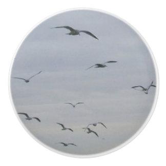 Seagulls Pull