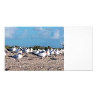 Seagulls standing on beach eye level photo card