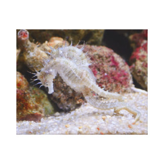 SEAHORSE CREATURE CANVAS - BEAUTIFUL CANVAS PRINT
