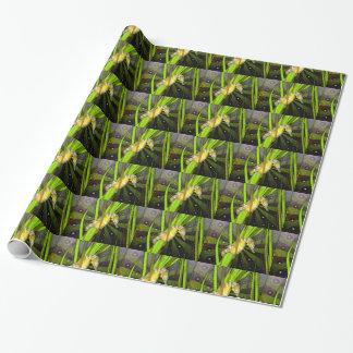 Seahorse Gift Wrap