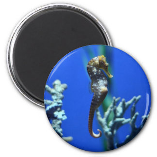 Seahorse Magic 6 Cm Round Magnet