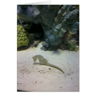Seahorse Note Card