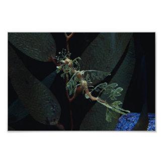 Seahorse Photo Print