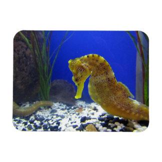 Seahorse Rectangular Photo Magnet