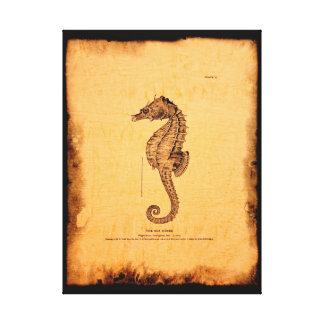 Seahorse Vintage Illustration Canvas