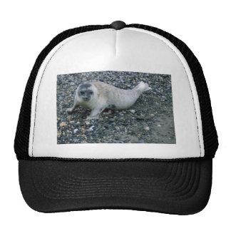 SEAL (2) HATS