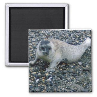 SEAL (2) MAGNET