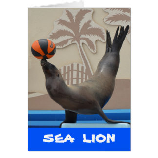 Seal (California Sea Lion) Card