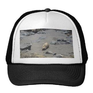 seal hats