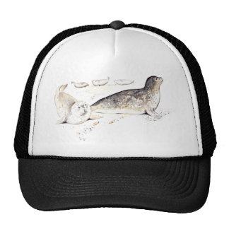 Seal Family On The Beach Hats