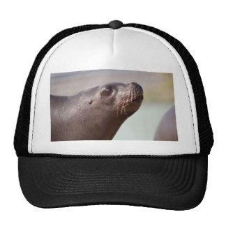 Seal Mesh Hats