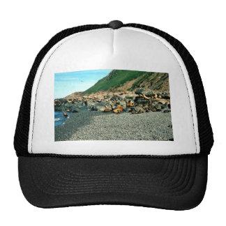 Seal Hat