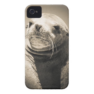 seal iPhone 4 Case-Mate cases